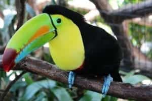what do toucans eat