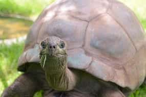 interesting facts about tortoises