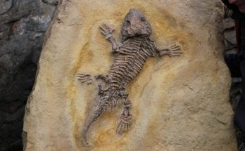 facts about fossils
