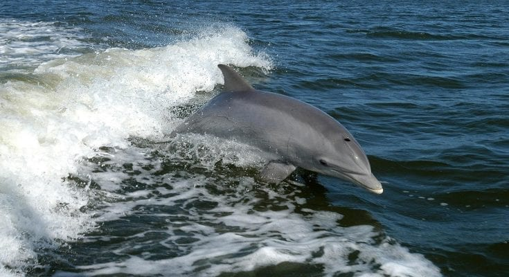 interesting facts about dolphins