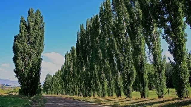 Genetically Modifying Trees To Prevent Air Pollution Proves Successful