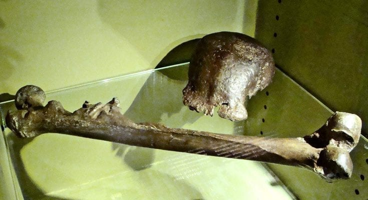 Evidence in Java says humans and Homo erectus didn't overlap