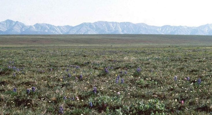 interesting facts about the tundra
