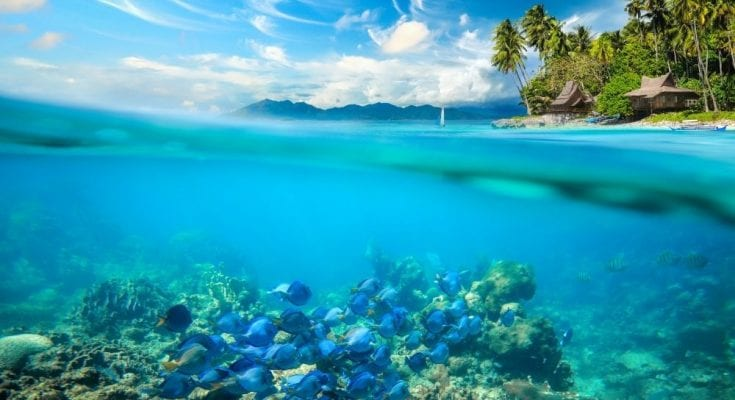 4 Important Things To Know About the Coral Reefs