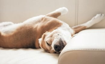 The Meaning of Dog Sleeping Positions