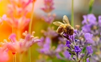 The Interesting Way Bees Perceive Color