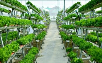 The Best Methods for Sustainable Farming