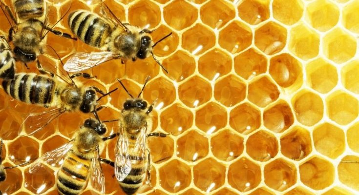 Things Aside From Honey That Honeybees Can Make