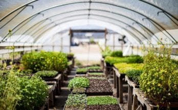 Tips To Make Your Greenhouse More Efficient