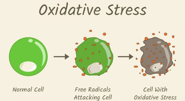 The Aging Process: What To Know About Oxidative Stress