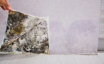 5 of the Most Common Misconceptions About Mold