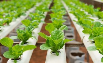 4 Things You Didn't Know About Hydroponics